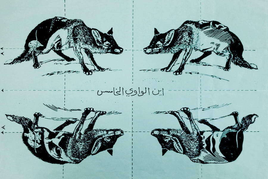 ​Two pictures above were being distributed by the British Embassy in Iraq, where pro-German and pro-Italian sympathies were very widespread. They depict a pig and a jackal, which are considered unclean by Muslims. Hitler and Mussolini could be made up of the parts of such a leaflet - Highlights for Warspot: The fifth pig — from Hitler to Trump | Warspot.net